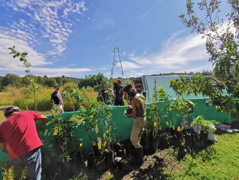 Anan reforestacion