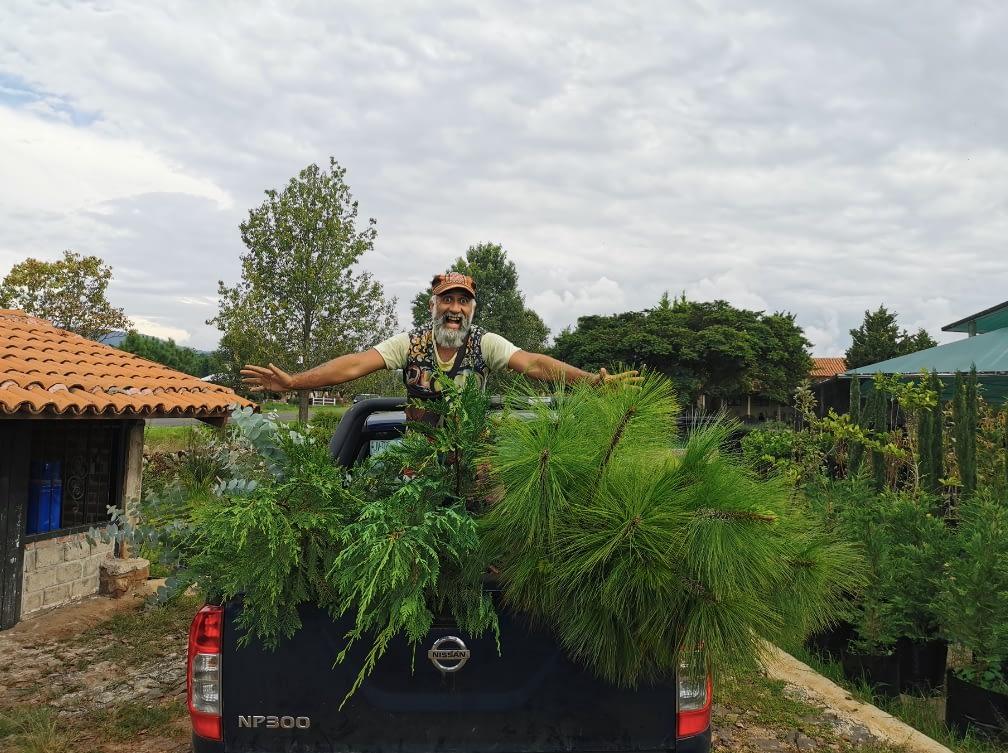 Anan reforestación