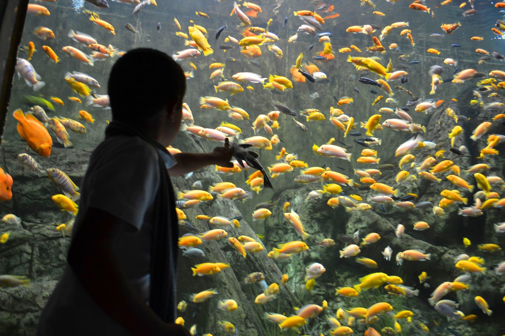 Anan Visita Zoológico